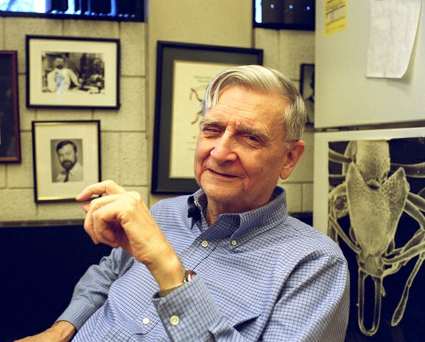 Edward O. Wilson, Harvard's Pelegrino University Research Professor and Curator in Entomology in the Museum of Comparative Zoology, in his office, Tuesday, December 17, 2002.