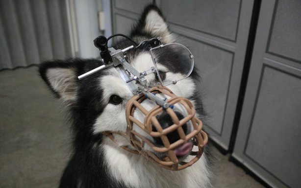 Rebel  a dog participating in a scientific study at the University of Lincoln to see how dogs see the world. NOVA investigates new discoveries in genetics that are illuminating the origin of dogs  with revealing implications for the evolution of human culture as well.