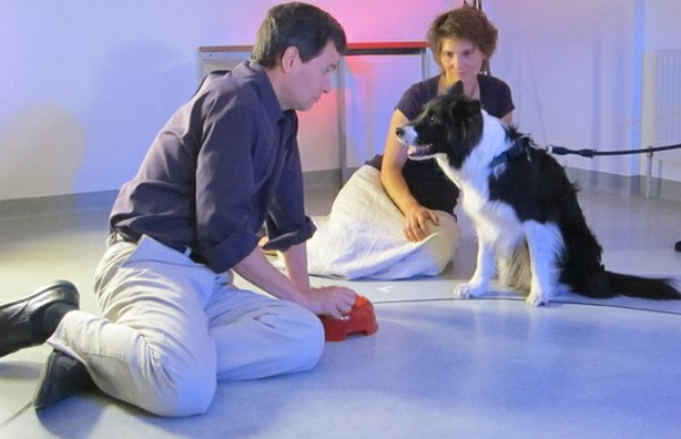 David Pogue and Prof. Friederike Range (University of Vienna) test whether dogs have a sense of fairness.