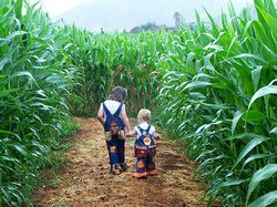 Promotional photo of two young guests exploring the corn maze at the Bonita Pumpkin Station. Courtesy of Pumpkin Station.