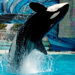Promotional image of Shamu the killer whale.