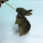 An anonymous Camp Pendleton-based Navy Corpsman has taken the Internet by storm by posting video of the baby rabbits he rescued and nursed back to health in his barracks.