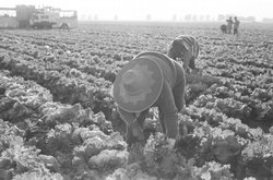 Juan Lopez and the United Farm Workers