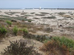 A stretch of coastal dune, marsh and intertidal zone in Ocean Beach is thriving with the help of volunteers.