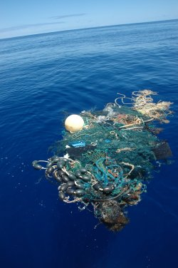 Floating debris found by the SEAPLEX expedition. The debris at the center of the North Pacific Ocean has the potential to damage marine life and alter the biological environment.