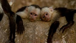 Nature: Clever Monkeys 