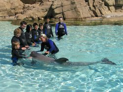 Cancer patients from Children's Hospital take turns petting a dolphin at SeaWorld.