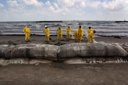 A BP cleanup crew removes oil from a beach on May 23, 2010 at Port Fourchon, Louisiana. Officials now say that it may be impossible to clean the hundreds of miles of coastal wetlands affected by the massive oil spill that continues gushing in the Gulf of Mexico.