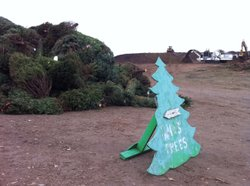 Christmas trees are piled up at the greenery at the Miramar Landfill in December 2010 in San Diego, California.