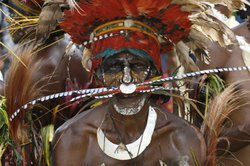 Male tribesman at the Goroka Show with the fine quills of the King of Saxony used as a nose piece, Papua New Guinea.
