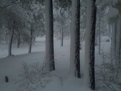 A view of snow blanketing the trees and hillside at the 6,000 foot elevation on Mt. Laguna, taken from the Mount Laguna Retreat Center on Sunrise Highway, on February 20, 2011. 