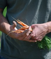 Carrots are among the crops local farms produce for regional businesses and institutions.
