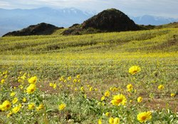 The colorful flowers and nearby snow-capped peaks of Jubilee Pass disguise the fact that Death Valley is the nation's hottest and driest place.