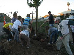 Residents of all ages  work together to plant trees along Highway 101, Dec 7th 2011
