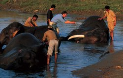 "Michael Palin washing Joiraj, an elephant, at Kaziranga National Park. ""One of the great experiences of my traveling life. I'd never heard an elephant rumble with pleasure before."" Kaziranga, Nagaland and Assam"