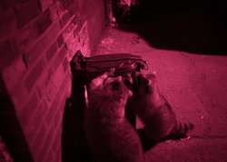 An infrared camera captures raccoons getting into a garbage can.