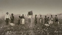 Historical photo of slaves working in the fields.