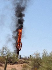 This photo of a cactus on fire, taken by Fountain Hills, Ariz. resident Marianne Abrahamson, went viral on Facebook.