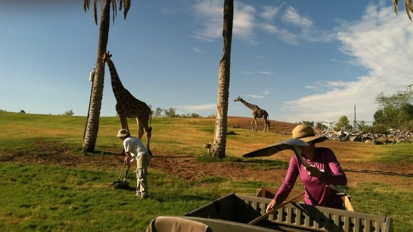The African Savanna at the Phoenix Zoo hosts a diverse array of noble and majestic wildlife. It's also hotter than a frying pan in the dead of summer.