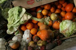 A box of food scraps that will be composted sits at the Norcal Waste Systems transfer station April 21, 2009 in San Francisco, California.