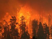 The Wallow Fire burned 538,000 acres in Arizona and parts of Western New Mexico in late spring of 2011.