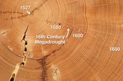 This Douglas-fir sample from the Southwest has annual tree rings dating back to the year 1527. The narrowing of the rings that formed from the 1560s through the 1590s indicates that the tree grew little during the 16th century megadrought.