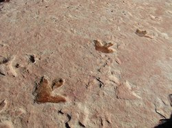 Tracks of what's believed to be the dilophosaurus near Tuba City, Ariz.