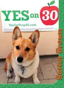 Sutter, Governor Jerry Brown's dog, who the governor says supports Yes on Prop 30.