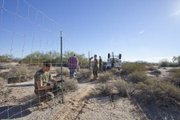 Marines with Marine Corps Air Station Yuma's Range Maintenance section aid wildlife biologists in building a temporary holding pen on the Barry M. Goldwater Range on Nov. 19.