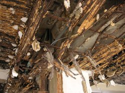 A close-up of a hole in the ceiling where the plaster has broken away from rainwater infiltration. The brown and hanging pieces are rusted metal lath that once held the plaster in place.