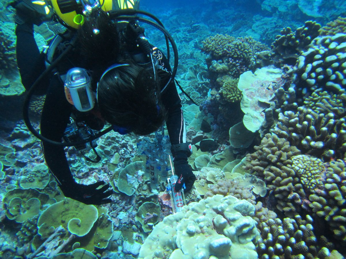 Doctoral student Yan Wei Lim collects samples during a 2013 expedition to the Line Islands, which are south of Hawaii near the equator.