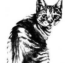 Avatar image for feralcats