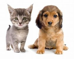 Preventive Pet Medicine Can Help Reduce Major Health Problems
