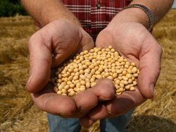 A farmer holding Monsanto&#39;s Roundup Ready soybean seeds at his family farm in Bunceton, Mo.