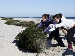 Alexandra Jones-Twaddell and Malley Chertkov add a Christmas tree the growing line in Island Beach State Park. The two high schoolers joined fellow students from the