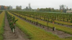 Oregon State University has been growing a variety of hazelnut trees over the years to develop blight-resistant breeds.
