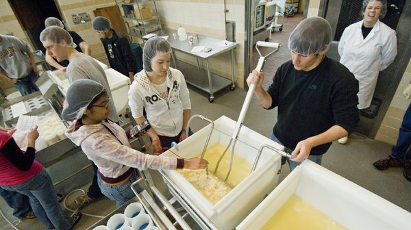 Oregon State University food science and technology students mix a batch of havarti cheese in a cheese making class.