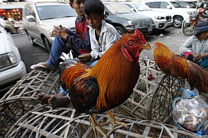 Scientists Publish Recipe For Making Bird Flu More Contagious