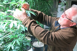 Industrial Hemp Could Take Root, If Legal Seeds Weren't S...