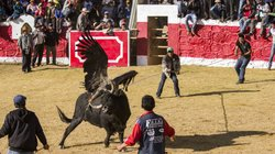 Villagers try to lasso the bull as it fights the condor in Coyllurqui, Peru, ...