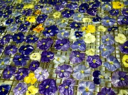 Violas grown on John Clemons' farm are crystallized and glazed. Clemons paten...