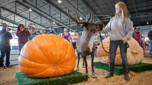 Ashleena Roberts holds a reindeer for scale next to a pum...