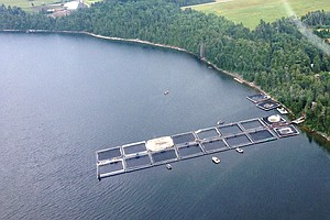 Could Great Lakes Fisheries Be Revived Through Fish Farms?