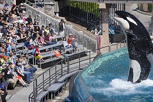 SeaWorld Hopes New Orca Habitats Will Stem A Tide Of Criticism