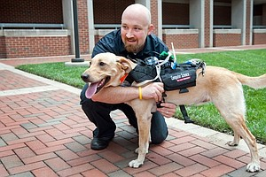 Innovation: Harness Could Allow Dogs, Humans To Communicate