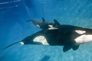 SeaWorld CEO Steps Down, Amid Controversy, Drop In Attend...