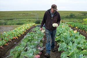 Alaska Farmer Turns Icy Patch Of Tundra Into A Breadbasket