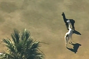 In Video: The Great Llama Drama Of 2015