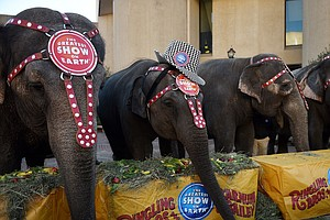 Ringling Bros. Says No More Circus Elephants By 2018