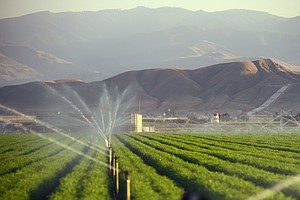 Calif. Farmers Gulp Most Of State's Water, But Say They've Cut Back